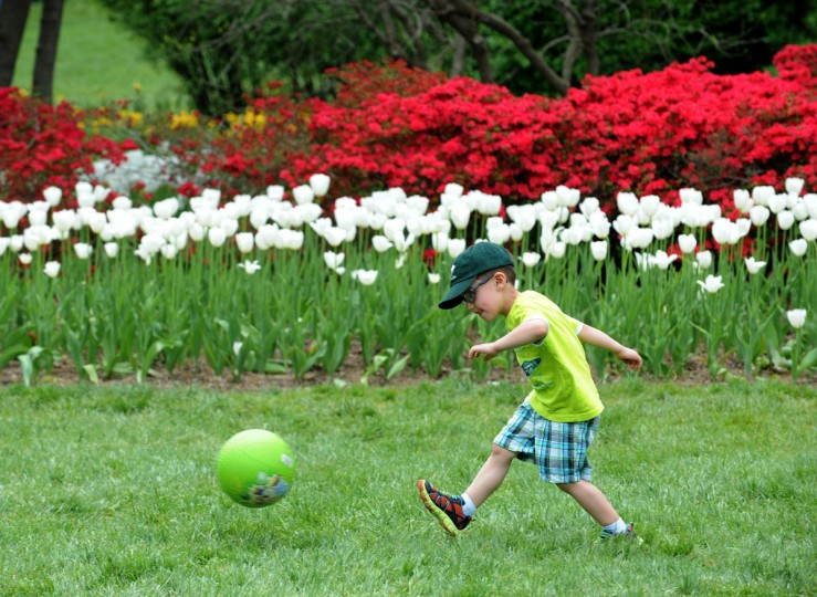 Eric Dickman, 4, from Owings Mills, kicks a ball alongside flowers blooming flowers and trees at Sherwood Gardens. He came to the gardens with his aunt and grandmother. (Algerina Perna/Baltimore Sun)