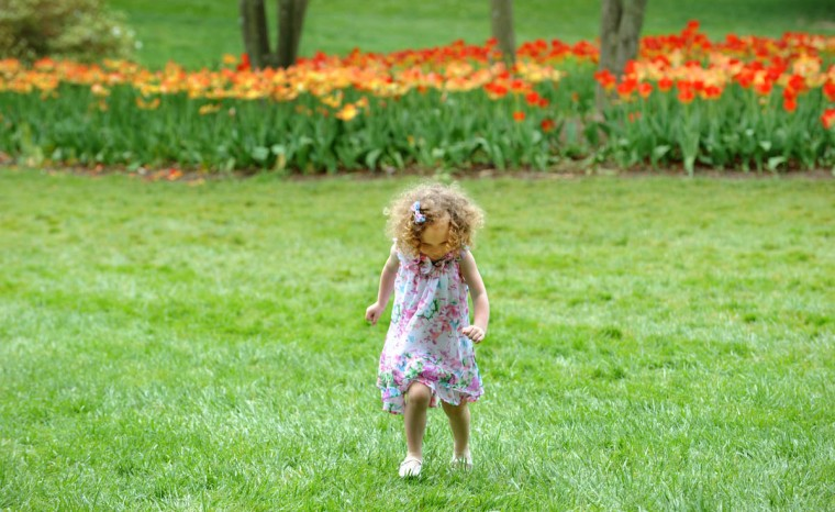 """lexa Lyons, 3, explores Sherwood Gardens. According to the Guilford Association, """"Approximately 80,000 tulip bulbs are planted annually along with other spring flowering bulbs."""" (Algerina Perna/Baltimore Sun)"""