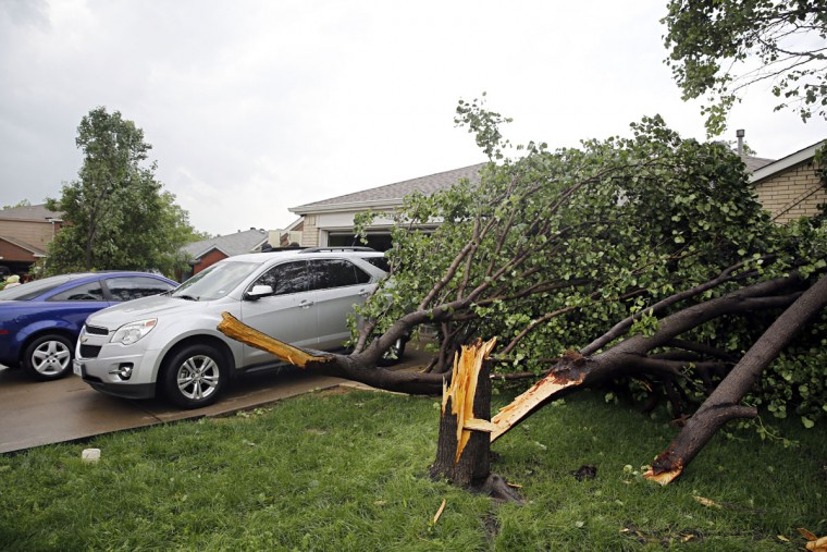 Snapped trees rest on the ground after a storm in Denton, Texas, Sunday, May 10, 2015. Several Great Plains and Midwest states were in the path of severe weather, including in North Texas, where the National Weather Service said a likely tornado damaged roofs and trees near Denton. (G.J. McCarthy/The Dallas Morning News via AP)