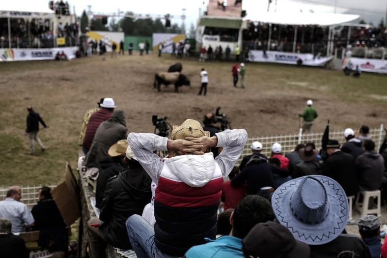 People watch a bull fight during the traditional Kafkasor Bullfighting festival on June 14, 2015, in Artvin, northeastern Turkey. (YASIN AKGUL/AFP/Getty Images)