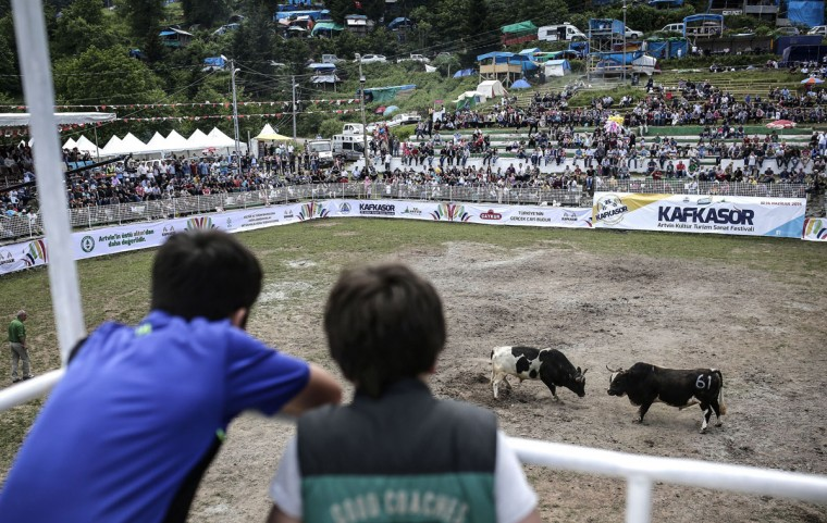 Children watch a bullfight during the traditional Kafkasor Bullfighting festival on June 13, 2015, in Artvin, northeastern Turkey. (YASIN AKGUL/AFP/Getty Images)