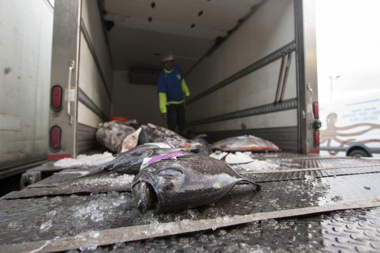 Fresh fish wait to be loaded on a truck at United Fishing Agency in Honolulu, Thursday, June 18, 2015. Fresh fish arrive daily and are auctioned off to the highest bidders based on quality and market value. The auction is the biggest in the United States and one of the largest in the world. (AP Photo/Caleb Jones)