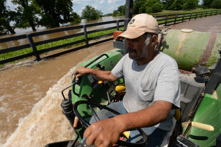 Anastacio Hernandez uses a tractor to push through several feet of water from the Red River at Moon Lake Farms in Bossier Parish, La. on Tuesday, June 9, 2015. The Red River crested Monday and likely will stay at or around its current level for the next few days before slowly decreasing, National Weather Service meteorologist Davyon Hill said. At one point this week, the river was at 37.02 feet, the highest since April 1945, he said. (Douglas Collier/The Shreveport Times via AP)