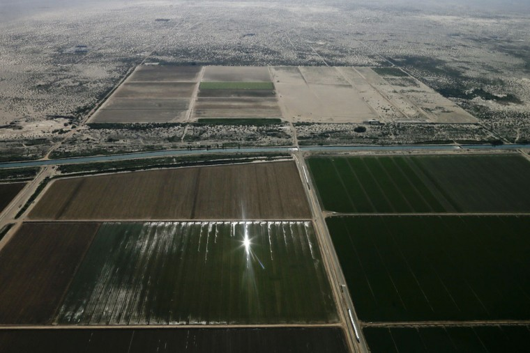 In this May 1, 2015, aerial photo, sunlight reflects off irrigated fields near Mesquite, Calif. Colorado River water is diverted near Yuma, Arizona, to an 82-mile canal that runs west along the Mexican border and then north into 1,700 miles of gated dirt and concrete channels that crisscross farms.When gates open, water floods fields and gravity carries increasingly salty runoff downhill through the New and Alamo rivers to the Salton Sea. (AP Photo/Gregory Bull)