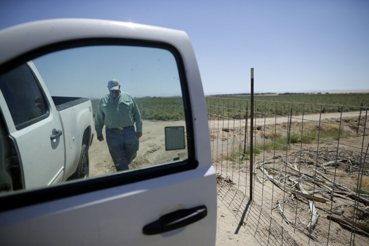In this April 29, 2015, photo, farmer Al Kalin walks back to his truck on his farm near Westmorland, Calif. Kalin, who farms 1,800 acres near the Salton Seas's southern shores, installed sprinklers and other water saving measures to replace flood irrigation over the last five years. (AP Photo/Gregory Bull)