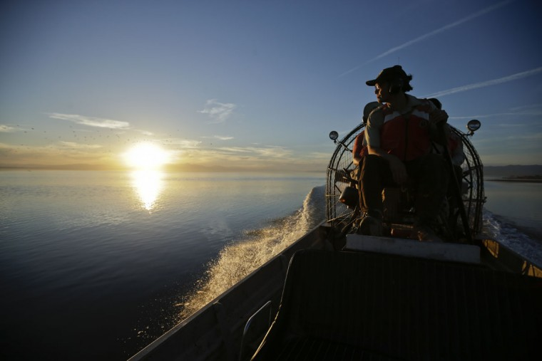 """In this April 29, 2015, photo, biologist Tom Anderson of the Sonny Bono Salton Sea National Refuge Complex steers an airboat across the shallow waters of the Salton Sea near Niland, Calif. Often called the """"The Accidental Sea,"""" because it was created when the Colorado River breached a dike in 1905, Salton Sea now faces a looming calamity as coastal Southern California clamors for more water. (AP Photo/Gregory Bull)"""