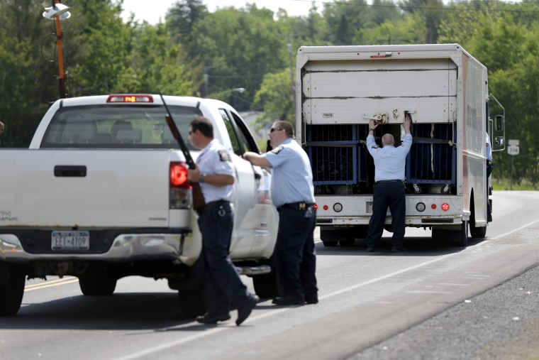 Law enforcement officials check the back of trucks at a check point near the border of Dannemora, N.Y. Police were resuming house-to-house searches near the maximum-security prison in northern New York where David Sweat and Richard Matt , two killers escaped using power tools. (Seth Wenig/Associated Press)