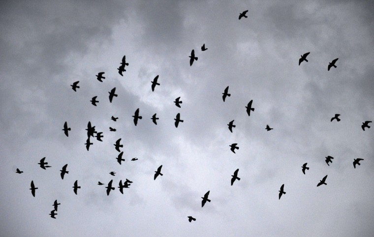 Birds fly as rain clouds are seen in the sky over the river Yamuna in Allahabad on July 6, 2015. (AFP Photo/P / )