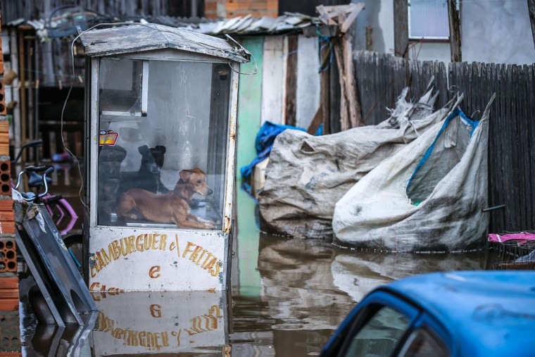Two dogs took shelter inside a hamburgers and chips stall on a flooded street in Villa Rica, Gravatai, Brazil, on July 21, 2015. (JEFFERSON BERNARDES/AFP/Getty Images)