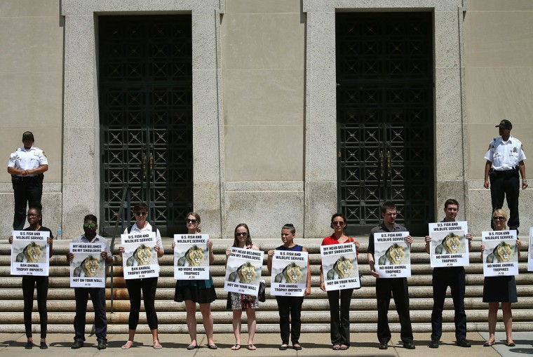 People for the Ethical Treatment of Animals (PETA) protesters hold pictures of Cecil the Lion as they stand in front of the Department of Interior building to protest against the importing of wild game killed as trophies August 5, 2015 in Washington, DC. Peta is calling on the Fish and Wildlife Service to take steps to end cruel trophy hunting by listing lions as a threatened species and banning the importation of their heads, tails, and skins into the U.S. (Photo by Mark Wilson/Getty Images)