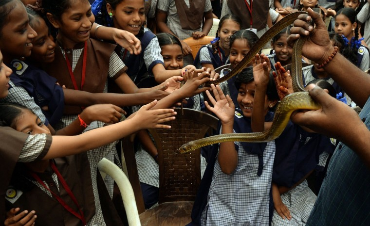 Indian schoolgirls take part in a snake-awareness programme marking the Nag Panchami snake festival in Mumbai on August 18, 2015. The Hindu festival of Nag Panchami is observed during the monsoon with prayers and tributes to snakes. (AFP Photo/Punit Paranjpepunit)