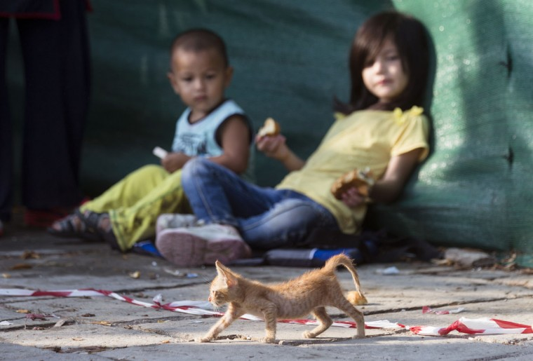 Migrant children watch a homeless kitten walking by as they rest while waiting to be registered at a police station at the southeastern island of Kos, Greece, early Thursday, Aug. 20, 2015. Greece this year has been overwhelmed by record numbers of migrants arriving on its eastern Aegean islands, with more than 160,000 landing so far. (AP Photo/Alexander Zemlianichenko)