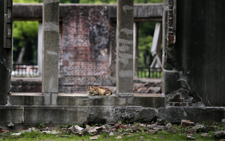 In this July 3, 2015 photo, a stray cat rests at now known as Atomic Bomb Dome in Hiroshima, western Japan. On Aug. 6, 1945, a U.S. plane dropped an atomic bomb on Hiroshima, the first nuclear weapon has been used in war. Japan surrendered on Aug. 15, ending World War II. (AP Photo/Eugene Hoshiko)