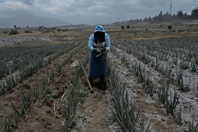 A worker takes precautions as ash from the Cotopaxi volcano falls over the crop fields in Machachi, south of Quito on August 22, 2015 a week after the volcano first started showing activity since its last eruption in 1877. Nearly 325,000 people could be affected by an eruption of Cotopaxi, the volcano looming beyond the Ecuadoran capital of Quito, officials said. The biggest risk is from an eruption melting the 5,900-metre (19,000-foot) mountain's snowcap and triggering massive melt-water floods and lahar mudflows that could sweep through nearby towns. (JUAN CEVALLOS/AFP/Getty Images)