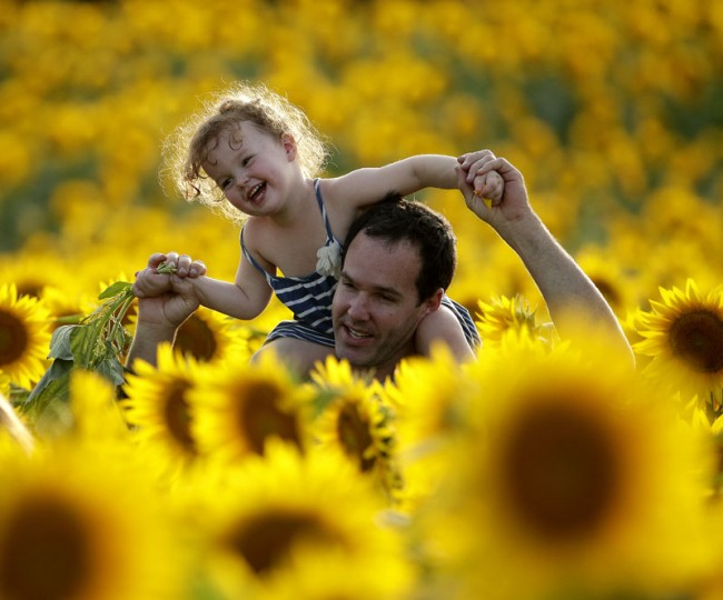 Rawly Stanhope walks with his daughter Cambrin, 3, through a sunflower field, Saturday, Sept. 5, 2015, near Lawrence, Kan. The 40-acre field, planted annually by the Grinter family, draws hundreds during the weeklong late summer blossoming of the flowers. (AP Photo/Charlie Riedel)