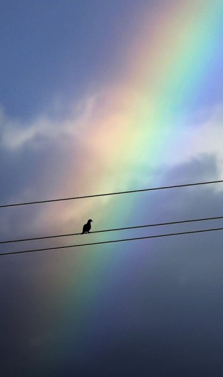 A bird rests on a power line following a thundershower, Tuesday, Sept. 15, 2015, in Hidalgo, Texas. (AP Photo/Eric Gay)