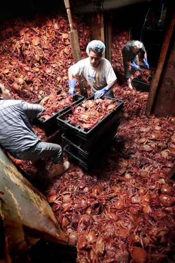 From left, Arturo Xiax, Leonardo Olmos, and Lucas Cipriano, load bins with red crab in the hold of the fishing vessel Krystle James in New Bedford, Mass. Found along the continental shelf, the red crabs are harvested in wire pots at depths greater than 2,000 feet. (Peter Pereira/The Standard-Times via AP)