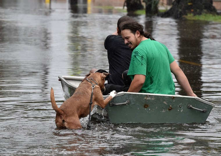 A dog tries to board a boat as two men row down a flooded street in Charleston, South Carolina on October 4, 2015. (MLADEN ANTONOV/AFP/Getty Images)
