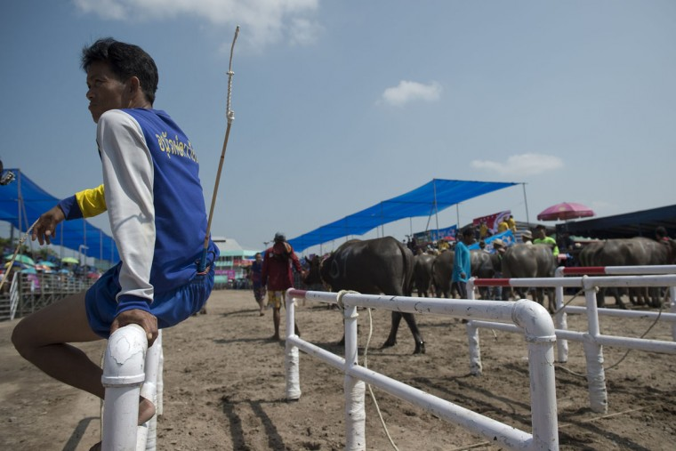A participant waits to take part in the annual buffalo races in Chonburi, southeast of Bangkok on October 26, 2015. (NICOLAS ASFOURI/AFP/Getty Images)