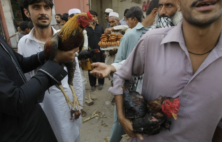 Men hold cockerels at a weekly pet market in Peshawar, Pakistan, Friday, Oct. 2, 2015. Hundreds of pet lovers visit the market to buy birds. (AP Photo/Mohammad Sajjad)