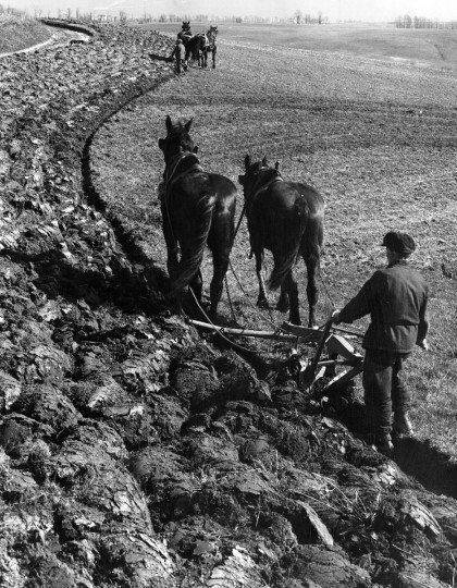 1951 - Contour Plowing on York Road farm in Baltimore County. (A. Aubrey Bodine/Baltimore Sun)