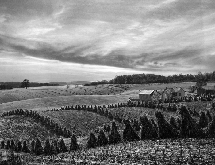 1949 - October fields in Baltimore County. (A. Aubrey Bodine/Baltimore Sun)