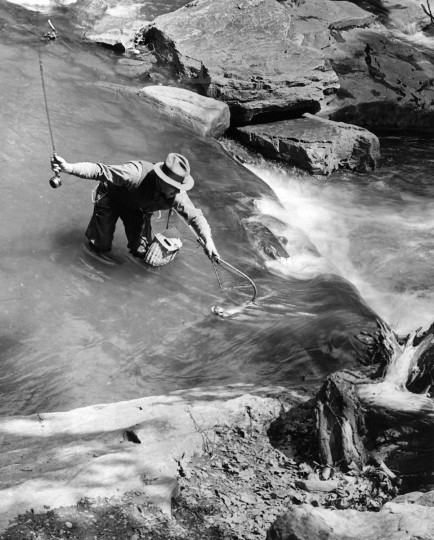 1946 - Serge N. Benson landing a rainbow trout in Hunting Creek. (A. Aubrey Bodine/Baltimore Sun)