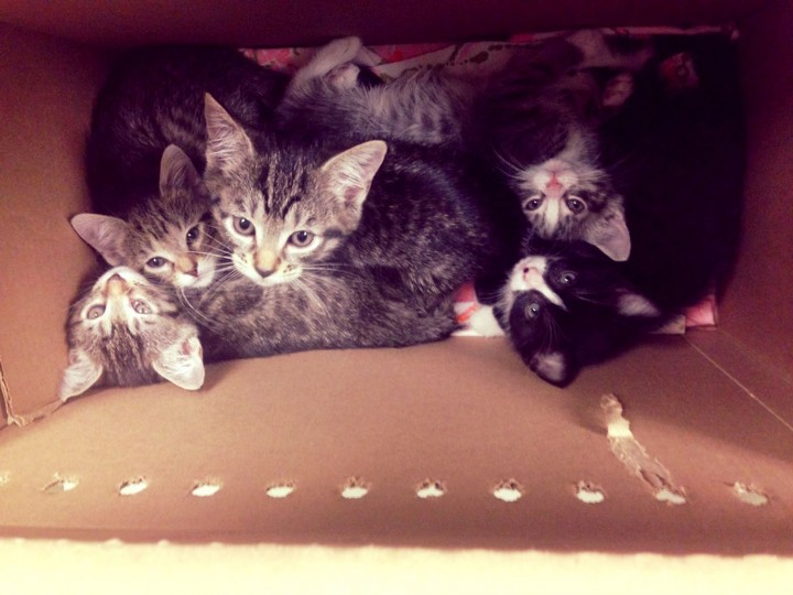 Box o'kitten! This litter is all too cozy being intertwined with each other.