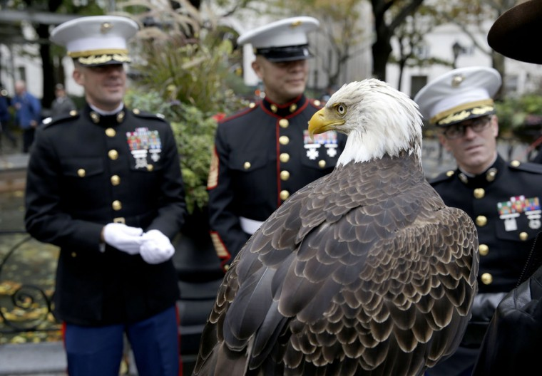 Marines look at a trained bald eagle named Challenger before the annual Veteran's Day parade in New York, Wednesday, Nov. 11, 2015. (AP Photo/Seth Wenig)