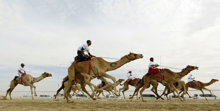 Jockeys compete in a camel race during the Mazayin Dhafra Camel Festival in the desert near the city of Madinat Zayed, 150 kms west of Abu Dhabi, on December 26, 2015. (KARIM SAHIB/AFP/Getty Images)