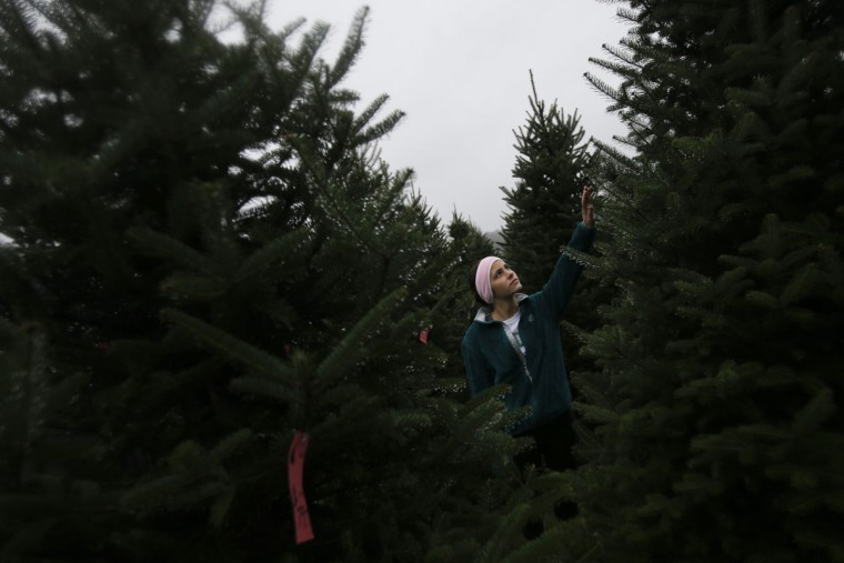 Ally Stang selects a Christmas tree at the John T Nieman Nursery, Saturday, Nov. 28, 2015, in Hamilton, Ohio. (AP Photo/John Minchillo)