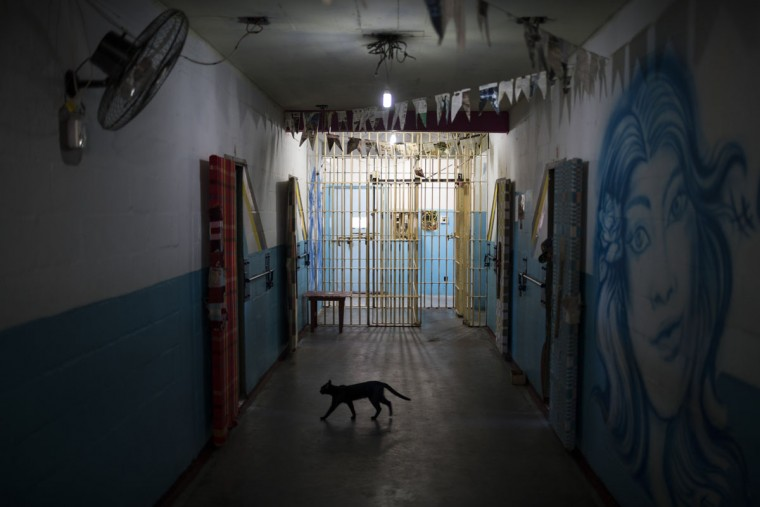 In this Nov. 30, 2015 photo, a cat walks across a cell block reserved for working prisoners at the Central Prison in Porto Alegre, Brazil. The cat comes and goes as it pleases at the prison, along with a few other cats who are cared for by inmates. (AP Photo/Felipe Dana)
