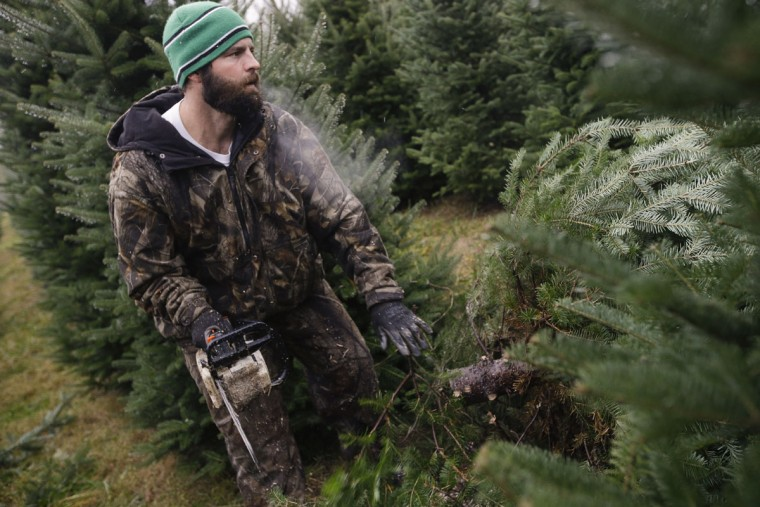 Arborist Tim Nieman selects and cuts Christmas trees at the John T Nieman Nursery, Saturday, Nov. 28, 2015, in Hamilton, Ohio. (AP Photo/John Minchillo)