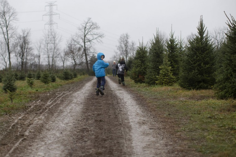 A young customer leads the a transport towards their Christmas tree at the John T Nieman Nursery, Saturday, Nov. 28, 2015, in Hamilton, Ohio. (AP Photo/John Minchillo)
