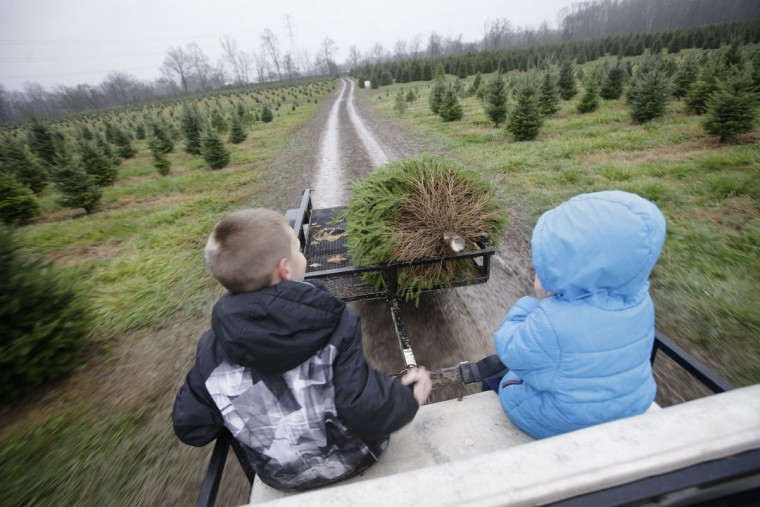 Two young customers sit on the back of a transport as they haul their freshly cut Christmas tree to a prep area at the John T Nieman Nursery, Saturday, Nov. 28, 2015, in Hamilton, Ohio. (AP Photo/John Minchillo)