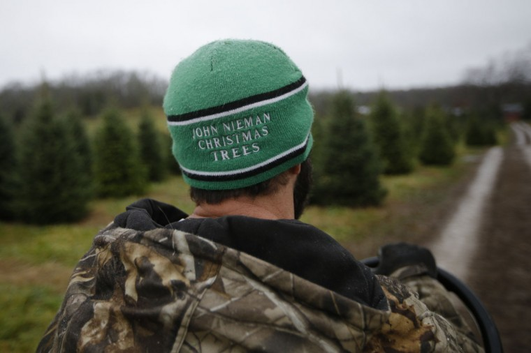Arborist Tim Nieman drives a load of freshly cut Christmas trees to a prep area at the John T Nieman Nursery, Saturday, Nov. 28, 2015, in Hamilton, Ohio. (AP Photo/John Minchillo)