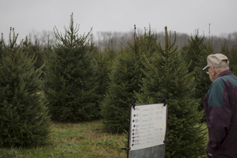 A customer browses a list of available Christmas trees at the John T Nieman Nursery, Saturday, Nov. 28, 2015, in Hamilton, Ohio. (AP Photo/John Minchillo)