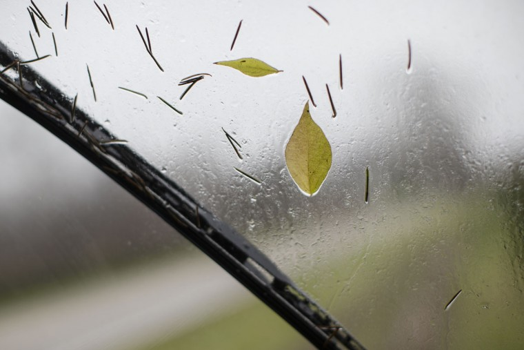 Pine needles and leaves stick to the windshield of a transport used to carry Christmas trees to a prep area at the John T Nieman Nursery, Saturday, Nov. 28, 2015, in Hamilton, Ohio. (AP Photo/John Minchillo)