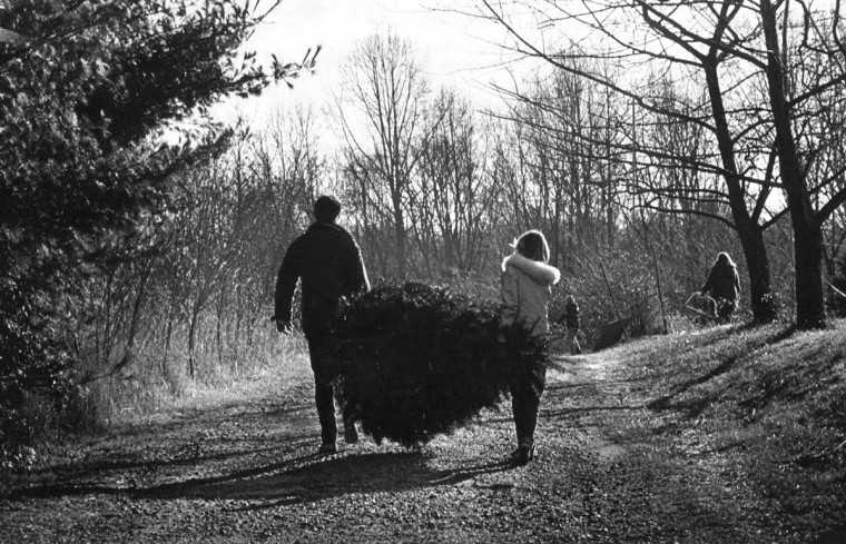 Joe and Donna Roberts, at the time a newly married Timonium couple, cut down a tree at the Locksley Farm in Jacksonville, on a cold winter's afternoon in December 1981, which will mark their first Christmas as a married couple. (Jed Kirschbaum/Baltimore Sun)