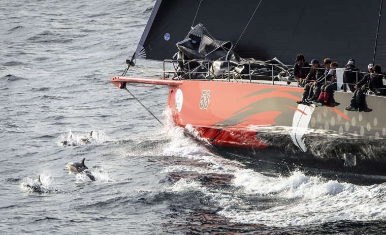In this handout photo released by Rolex, dolphins follow US supermaxi yacht Comanche heading to the finish in the Sydney to Hobart yacht race on December 28, 2015. (STEFANO GATTINI/AFP/Getty Images)