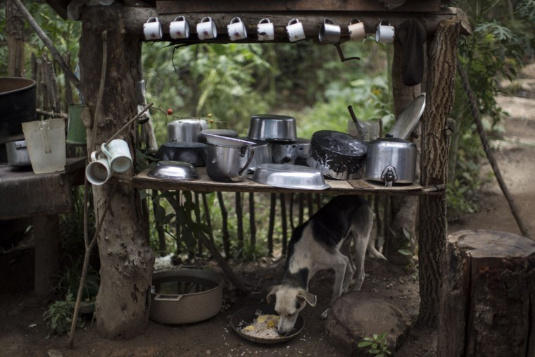 In this Nov. 19, 2015 photo, a dog eats under a table used to store dishes, mugs and pots in Areinha, Minas Gerais state, Brazil. The area known as Areinha is a no manís land where small groups of artisanal miners try their luck with artisan techniques, using wooden knives, metal pans, large water pumps and no infrastructure. (AP Photo/Felipe Dana)