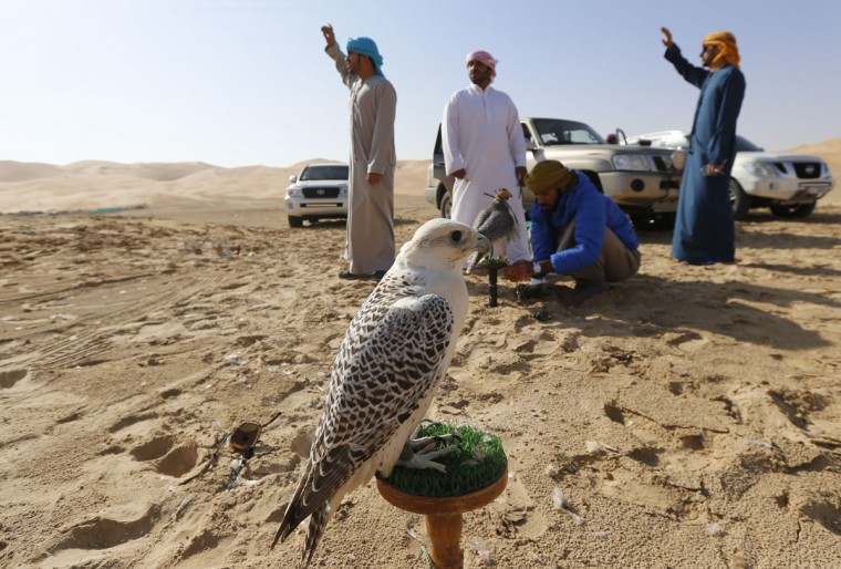 A bird of prey stands on a perch as Emiratis prepare themselves to train their birds on January 6, 2016, during the Liwa 2016 Moreeb Dune Festival in the Liwa desert, some 250 kilometers southwest of Abu Dhabi. (KARIM SAHIB/AFP/Getty Images)