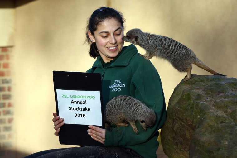 Zookeeper Veronica Heldt poses for a photograph as she counts meerkats during the annual stocktake of animals at ZSL London Zoo on January 4, 2016 in London, England. (Photo by Carl Court/Getty Images)