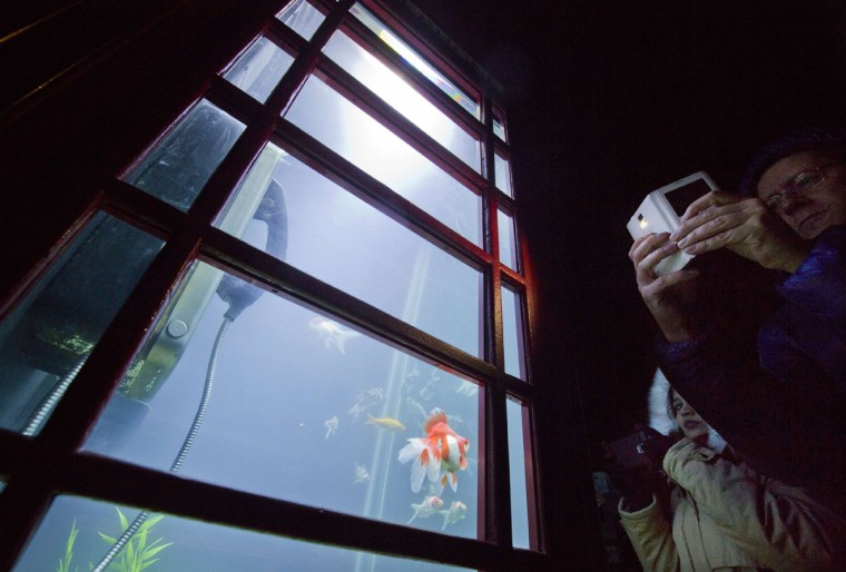 Spectators take pictures of the Aquarium by artists Benedetto Bufalino and Benoit Deseille part of the lumiere light festival in London on January 14, 2016. London hosts a festival that brings together international light artists to create installations across the capital. (JUSTIN TALLIS/AFP/Getty Images)