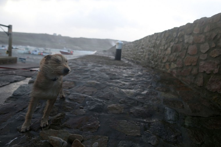 A dog is taken for a walk at the harbor in Auderville, northwestern France, on February 8, 2016, as strong winds hit the region. (CHARLY TRIBALLEAU/AFP/Getty Images)
