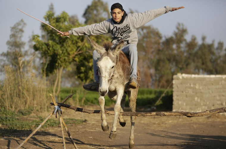 In this Friday, Feb. 5, 2016 picture, Ahmed Ayman and his donkey jump over a barrier in the Nile Delta village of Al-Arid about 150 kilometers north of Cairo, Egypt. Donkeys are a fixture of daily life in rural Egypt, where they are used for transportation or to haul goods, and can often be seen in Cairo and other major cities. But itís rare to see a donkey gallop, much less go airborne.(AP Photo/Amr Nabil)