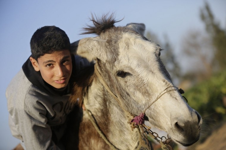 In this Friday, Feb. 5, 2016 picture, Ahmed Ayman, 14, and his donkey start their daily training in the Nile Delta village of Al-Arid about 150 kilometers north of Cairo, Egypt. By chance, he discovered her unique talent: the ability to leap over a hurdle like a horse. (AP Photo/Amr Nabil)