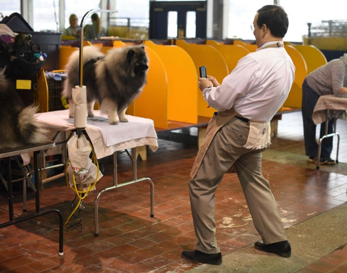 A handler takes a photo of his dog in the grooming area February 15, 2016 in New York during the first day of competition at the Westminster Kennel Club 140th Annual Dog Show. (AFP/Getty Images)