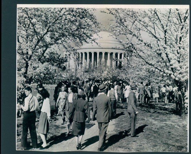 The Cherry Blossom Festival in Washington, D.C. Photo dated April 14, 1947.