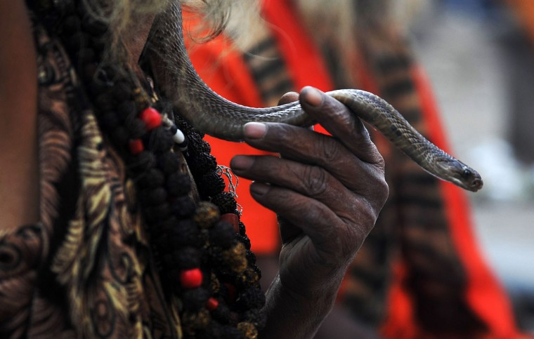 A Nepalese Sadhu (Hindu holy man) holds a snake as he sits near the Pashupatinath Temple during the Maha Shivaratri festival in Kathmandu on March 7, 2016. Hindus mark the Maha Shivratri festival by offering special prayers and fasting. Hundreds of sadhu have arrived in Kathmandu's Pashupatinath to take part in the Maha Shivaratri festival. (PRAKASH MATHEMA/AFP/Getty Images)
